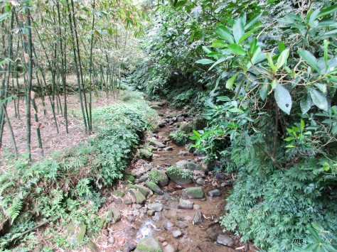 Creek along YingHe Cave Hiking Trail, Xindian District