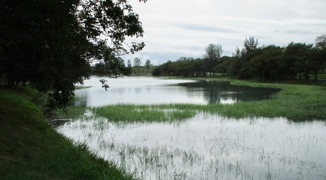 Taitung's wetlands