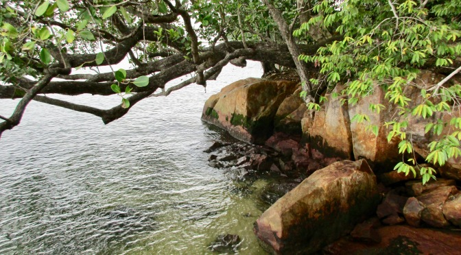 pulau ubin's chek jawa wetlands